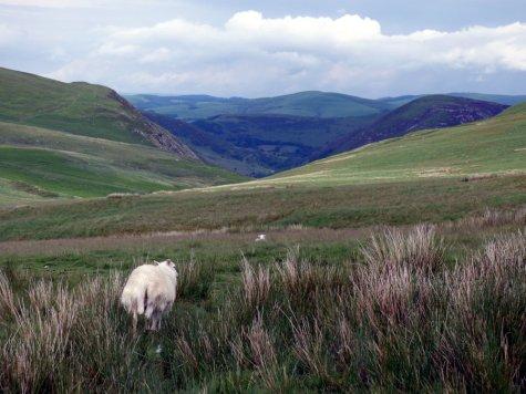 Wales 243