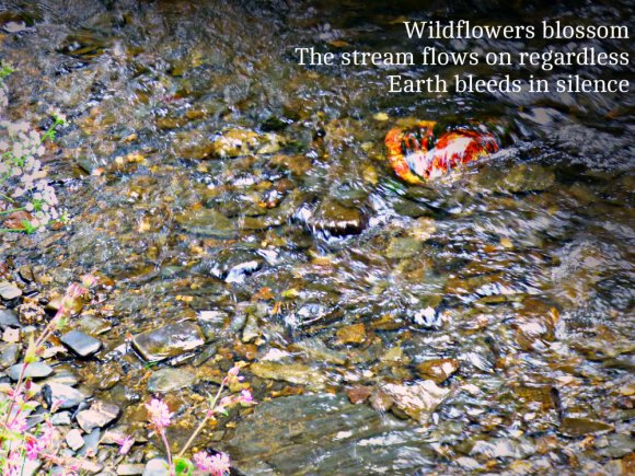 Wildflowers blossom The stream flows on regardless Earth bleeds in silence