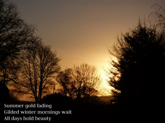 Summer gold fading Gilded winter mornings wait All days hold beauty