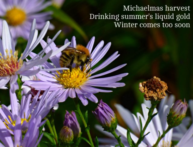 michaelmas-harvest-drinking-summers-liquid-gold-winter-comes-too-soon