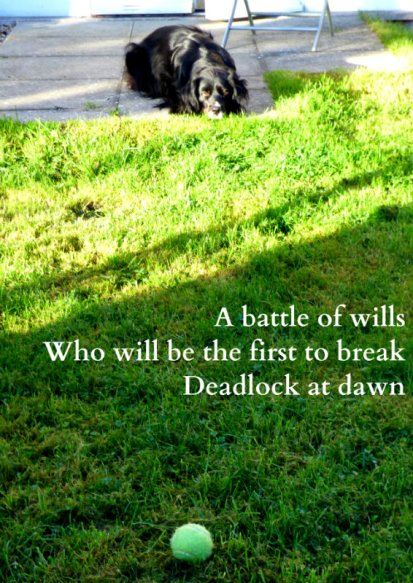 a-battle-of-wills-who-will-be-the-first-to-break-deadlock-at-dawn
