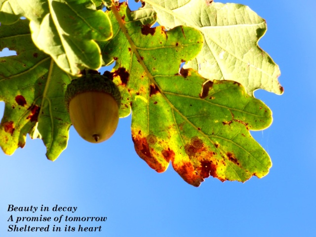 beauty-in-decay-a-promise-of-tomorrow-sheltered-in-its-heart