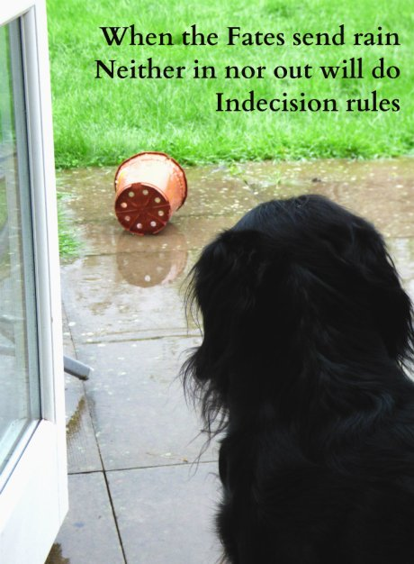 image-of-dog-on-doorstep-when-the-fates-send-rain-neither-in-nor-out-will-do-indecision-rules