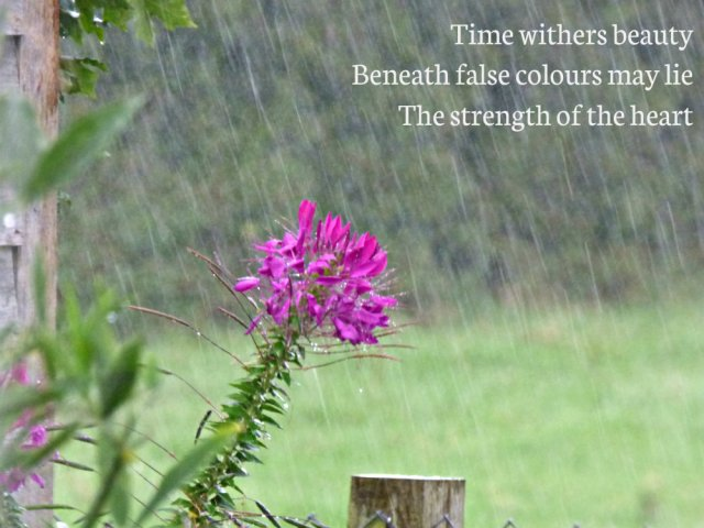 image-of-flower-in-rain-time-withers-beauty-beneath-false-colours-may-lie-the-strength-of-the-heart