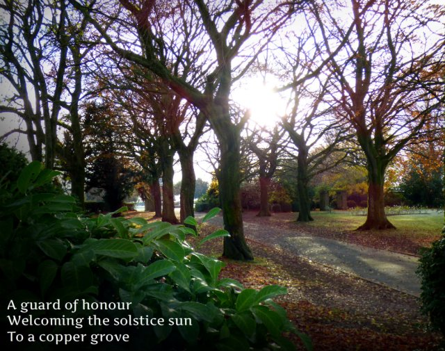 a-guard-of-honour-welcoming-the-solstice-sun-to-a-copper-grove