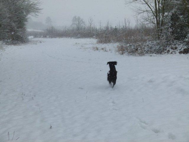 ani-snow-5