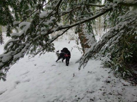 ani-snow-6