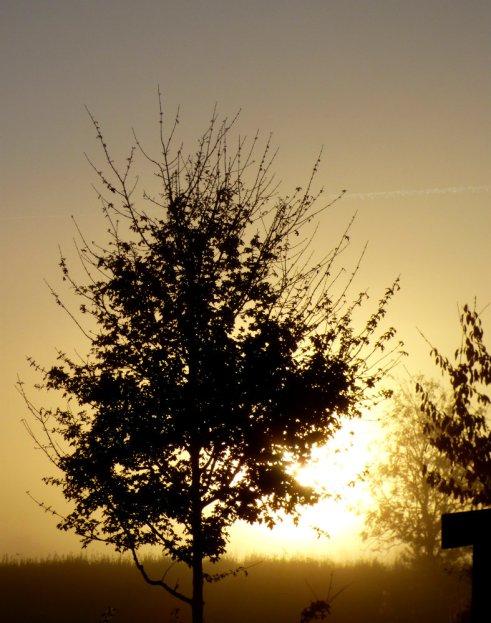 dawn-002