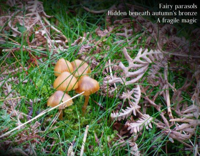 fairy-parasols-hidden-beneath-autumns-bronze-a-fragile-magic