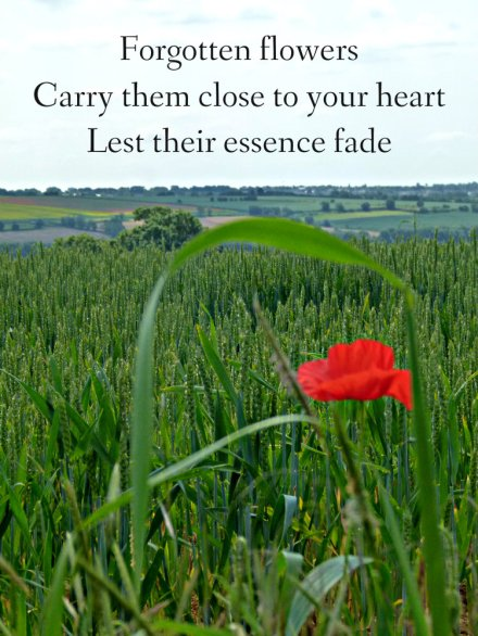 forgotten-flowers-carry-them-close-to-your-heart-lest-their-essence-fade