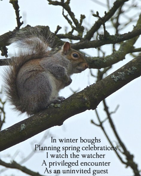 in-winter-boughs-planning-spring-celebrations-i-watch-the-watcher-a-privileged-encounter-as-an-univited-guest