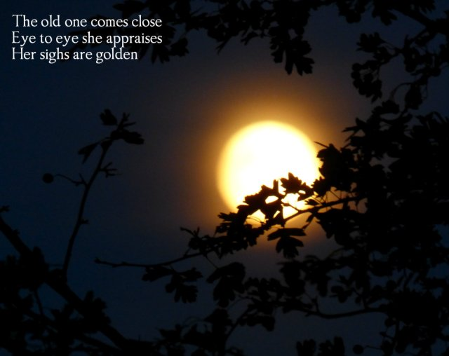 the-old-one-comes-close-eye-to-eye-she-appraises-her-sighs-are-golden