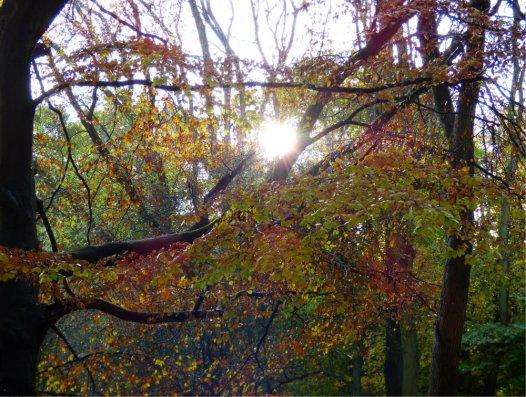 trees-dew-moon-022
