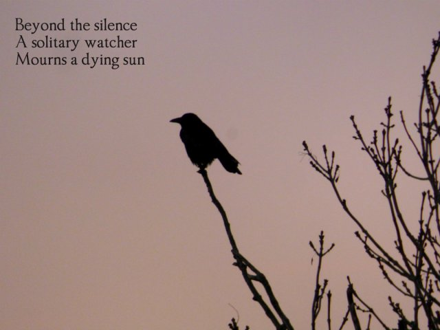 beyond-the-silencea-solitary-watcher-mourns-a-dying-sun