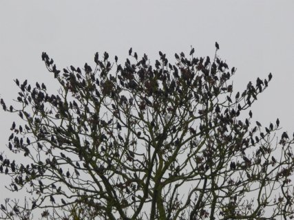 sofa-birds-010