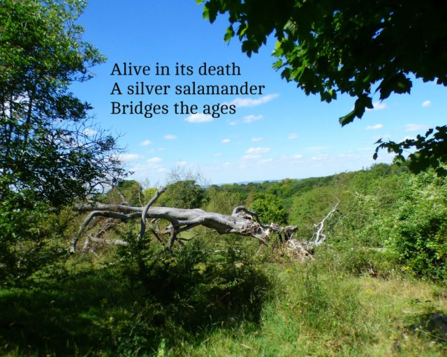 alive-in-its-death-a-silver-salamander-bridges-the-ages