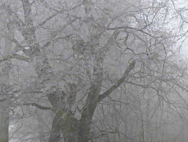 frost-fog-derbyshire-hermits-001