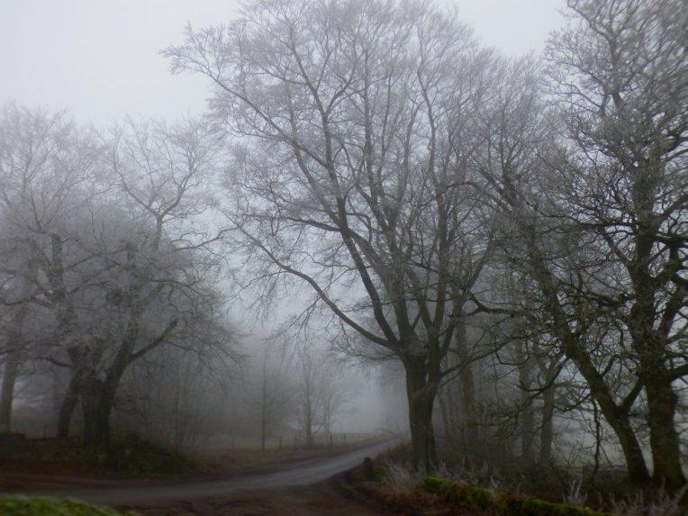 frost-fog-derbyshire-hermits-002