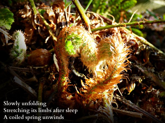 slowly-unfolding-stretching-its-limbs-after-sleep-a-coiled-spring-unwinds