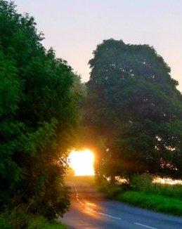 sue-golden-dawn