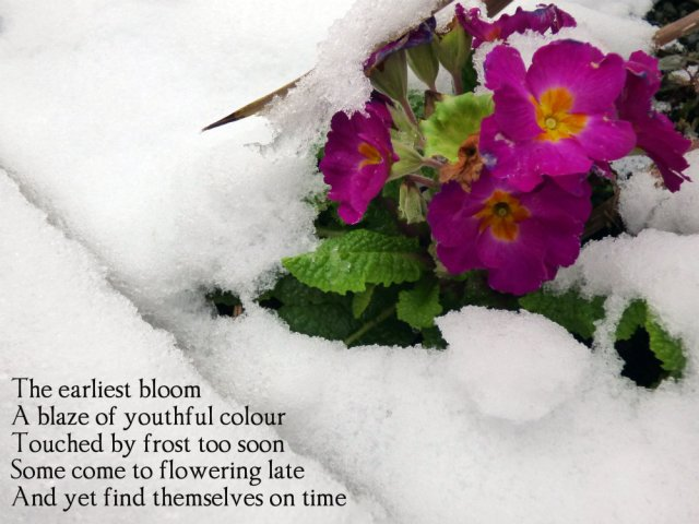 the-earliest-bloom-a-blaze-of-youthful-colour-touched-by-frost-too-soon-some-who-flower-late-find-themselves-on-time
