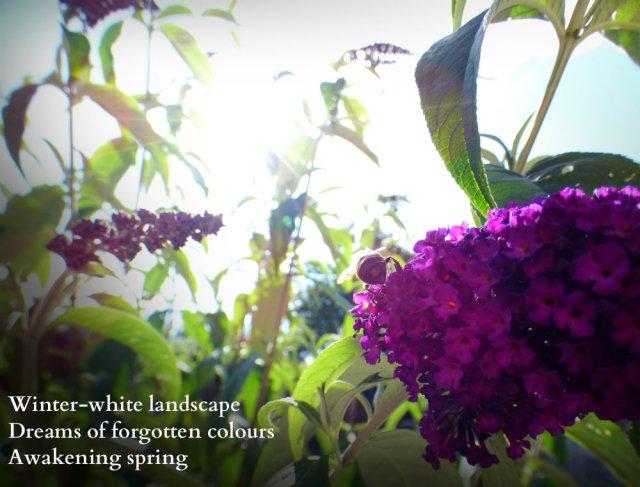winter-white-landscape-dreams-of-forgotten-colours-awakening-spring