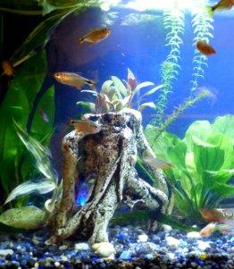 aquarium-fish-2