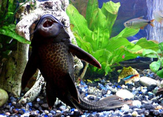 aquarium-fish-3