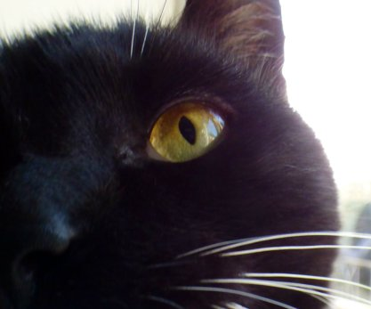 cat-close-up-of-eye-2