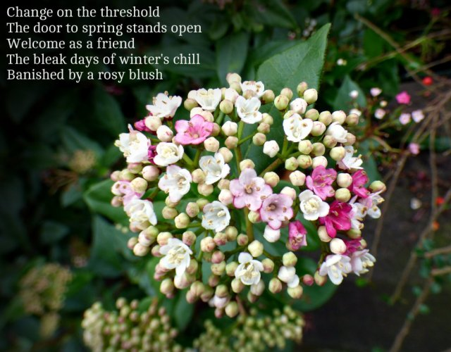 change-on-the-threshold-the-door-to-spring-stands-open-welcome-as-a-friend-the-bleak-days-of-winters-chill-banished-by-a-rosy-blush
