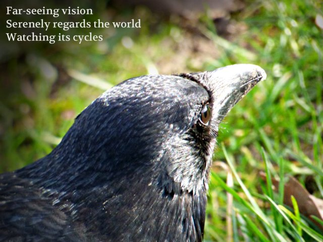 far-seeing-vision-serenely-regards-the-world-watching-its-cycles