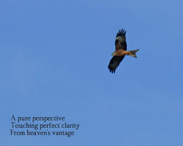 hawk-in-flight-a-pure-perspective-touching-perfect-clarity-from-heavens-vantage