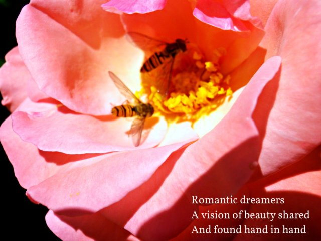 image-of-rose-romantic-dreamers-a-vision-of-beauty-shared-and-found-hand-in-hand