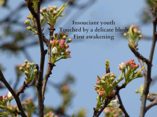 insouciant-youth-touched-by-a-delicate-blush-first-awakening