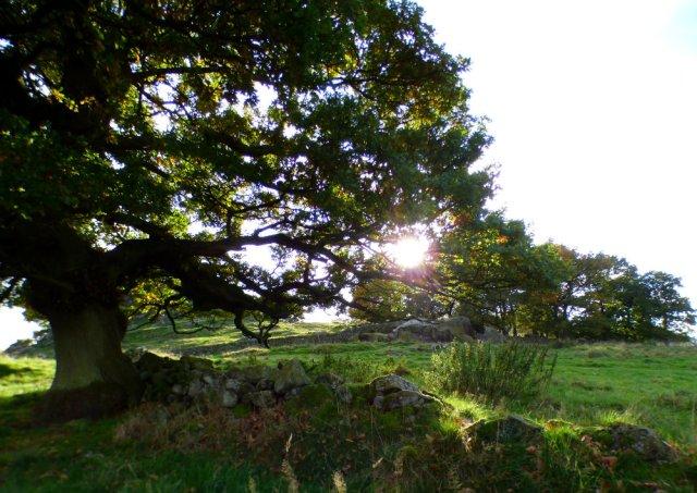 sheep-hordrons-nine-stones-robin-hoods-253