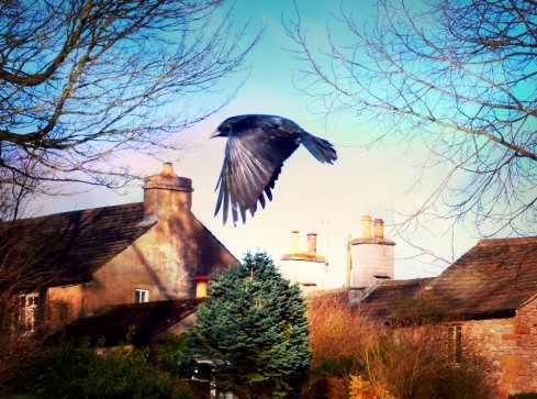 corvid in flight - Sue Vincent