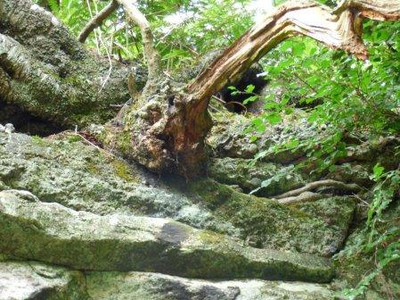 Wales llandudno, alderley, mines, 253