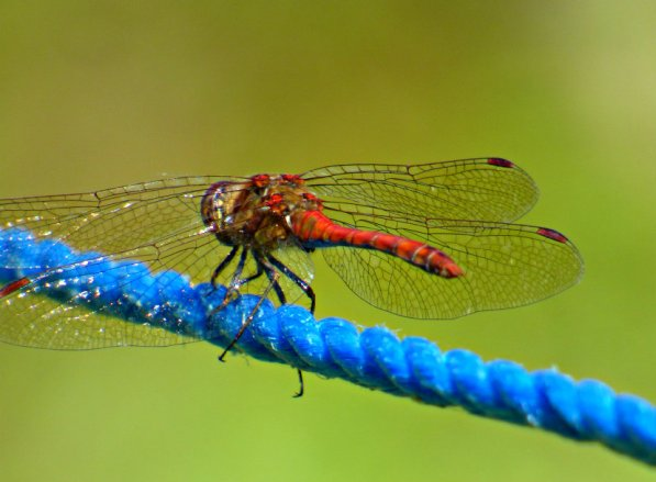 red dragonfly on blue rope