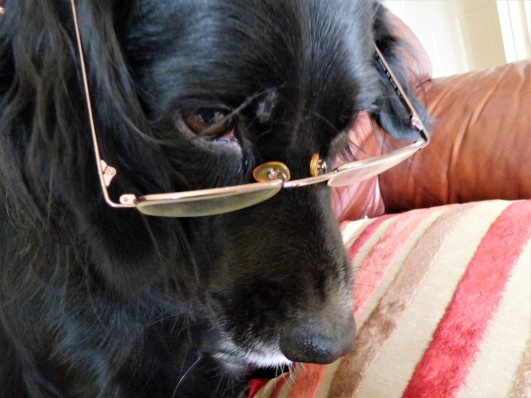 ani in glasses