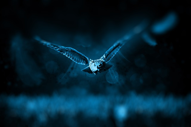 owl-518838_640