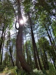 sun caught in trees