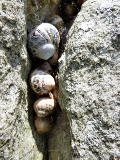 snails clustered in a fissure in a standing stone