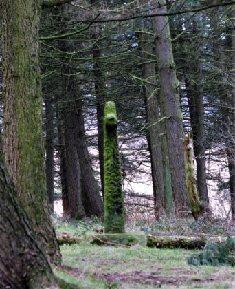 way-stone-in-the-wood