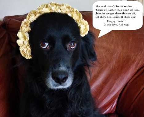 """Picture of Ani, the small dog, wearing a flower crown. She says: """"She said there'd be no antlers, 'cause at Easter they don't do 'em. Just let me get these flowers off...I'll show her...and I'll chew 'em."""" Happy Easter, much love, Ani."""