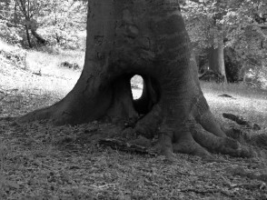 The monochrome image shows the base of a tree with a hole, like a doorway, through its base...