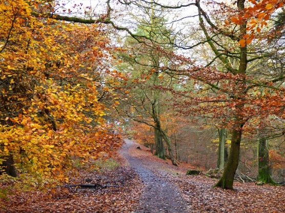 The image shows a deserted path through the woods, carpeted with the fallen leaves of autumn.