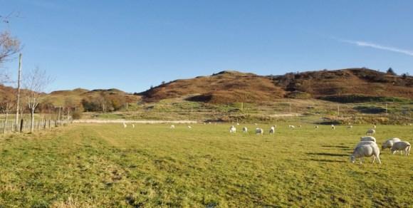 Strontoiller-crop-2 jo woolf