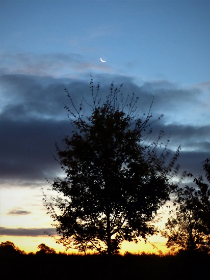 crescent moon rising above a silhouetted tree